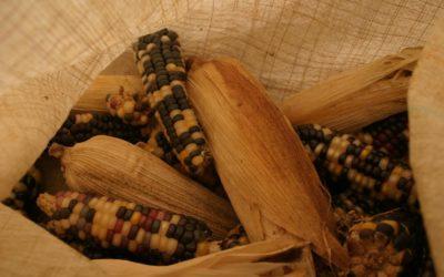 Geschichten aus Guatemala: Von Maisernte, Lebenshunger und Dankbarkeit
